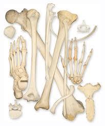 images bones