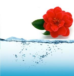 acqua-alcalina-ionizzata-bufala-o-verita